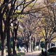 駒沢公園 (061202)